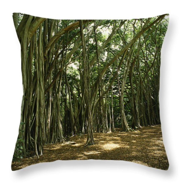 A Grove Of Banyan Trees Send Airborn Throw Pillow by Paul Damien