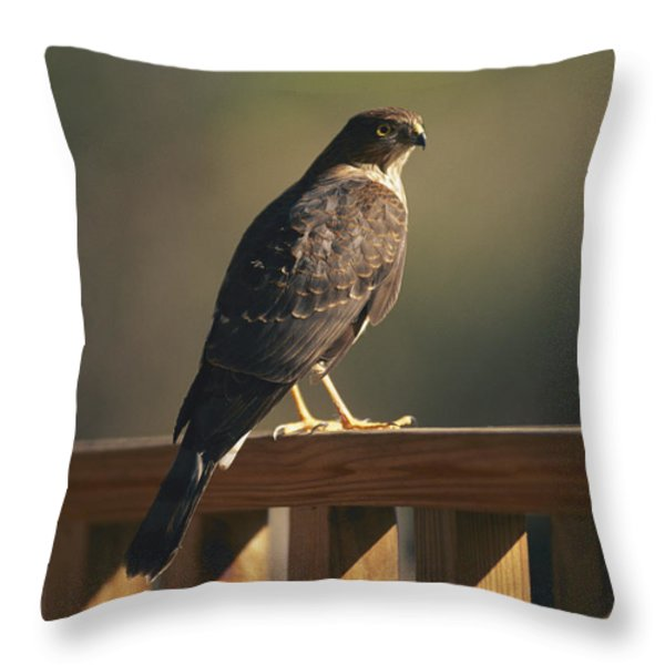 A Hawk Takes A Rest On A Porch Rail Throw Pillow by George F. Mobley