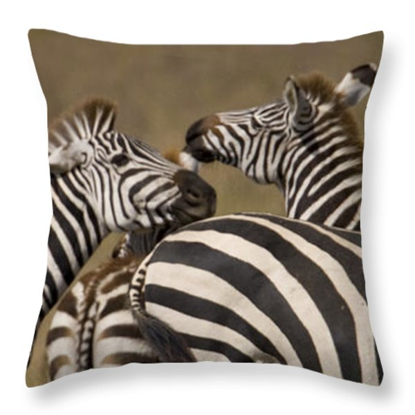 A Herd Of Zebra Stand In A Plain Throw Pillow by Ralph Lee Hopkins