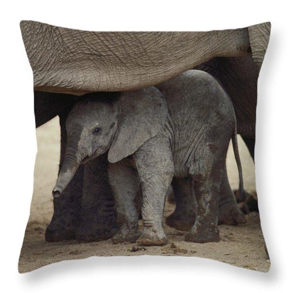 A Juvenile Elephant Loxodonta Africana Throw Pillow by Kenneth Garrett