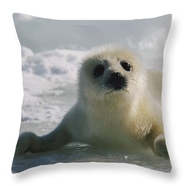 A Juvenile Harp Seal Pagophilus Throw Pillow by Tom Murphy
