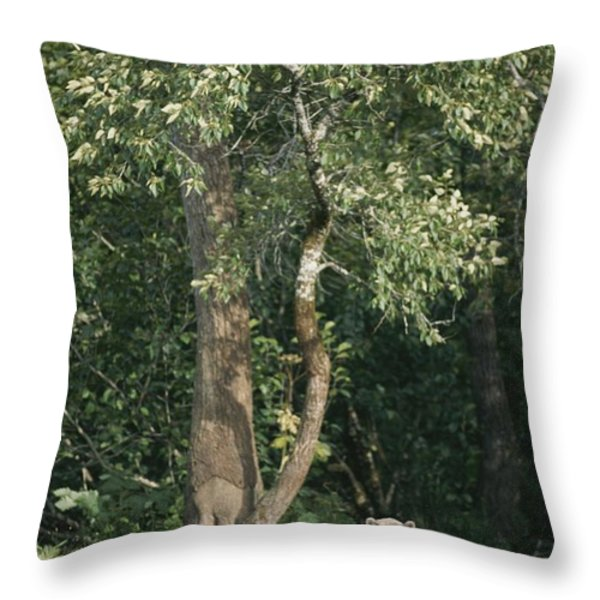 A Kodiak Brown Bear On The Bank Throw Pillow by George F. Mobley