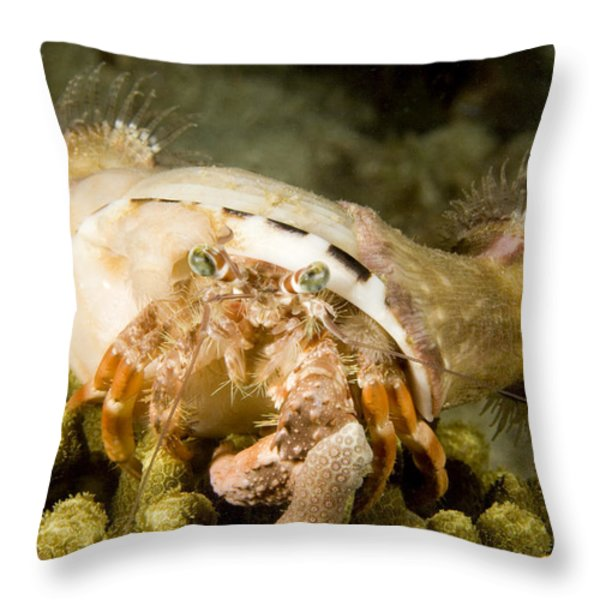 A Large Hermit Crab With Sea Anemones Throw Pillow by Tim Laman