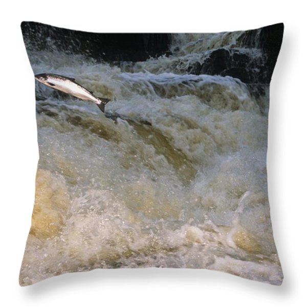 A Leaping Salmon In The Ballysadare Throw Pillow by Paul Nicklen