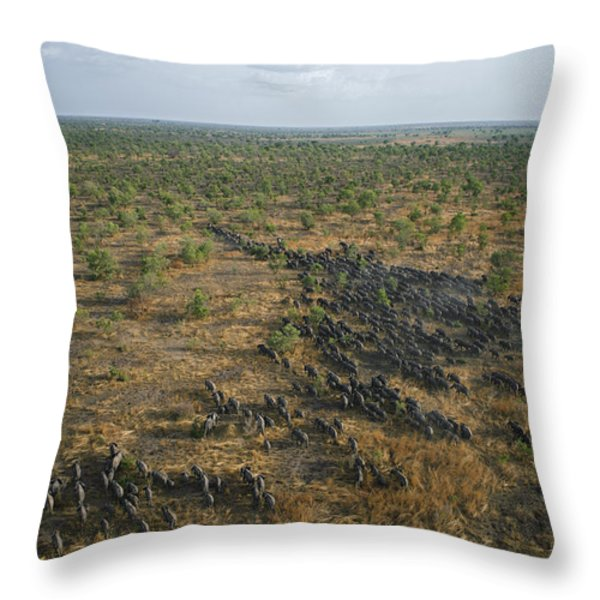 A Lone Female Elephant, The Matriarch Throw Pillow by Michael Nichols