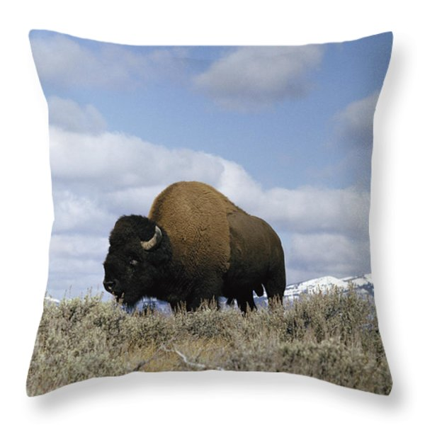 A Magnificent American Bison Bull Bison Throw Pillow by Dr. Maurice G. Hornocker