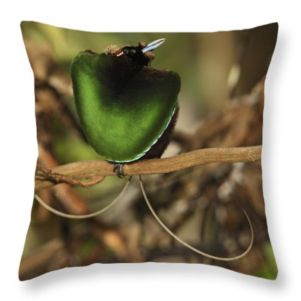 A Magnificent Bird Of Paradise Male Throw Pillow by Tim Laman