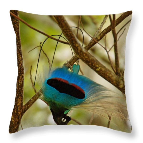 A Male Blue Bird Of Paradise Performing Throw Pillow by Tim Laman