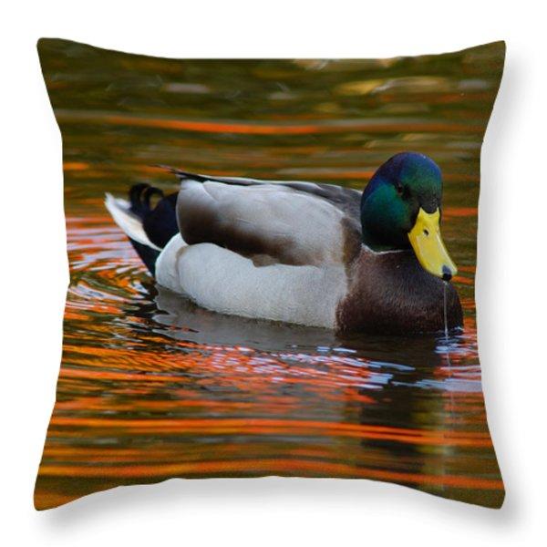 A Male Mallard Duck Drinking.  Fall Throw Pillow by Darlyne A. Murawski