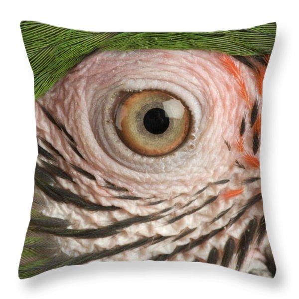 A Military Macaw Ara Ambiguus Throw Pillow by Joel Sartore