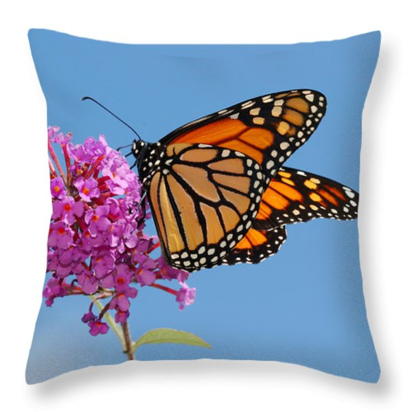 A Monarch Butterfly, Danaus Plexippus Throw Pillow by Darlyne A. Murawski