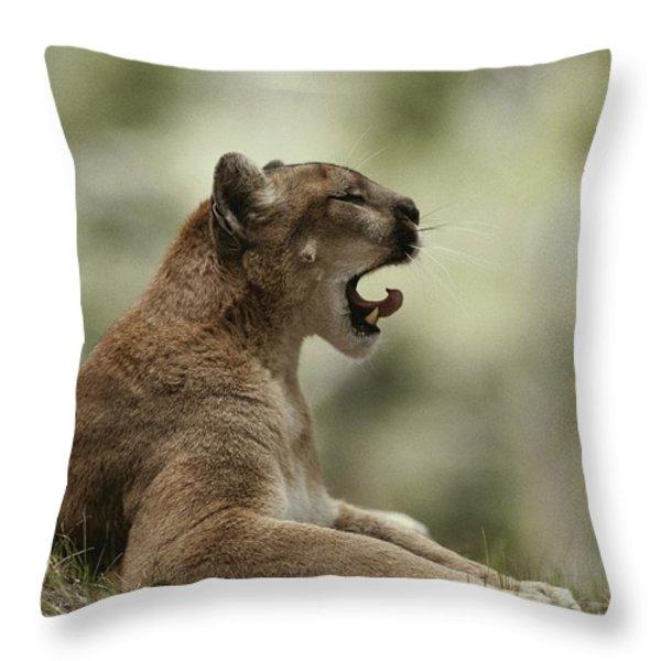 A Mountain Lion, Felis Concolor, Curls Throw Pillow by Jim And Jamie Dutcher