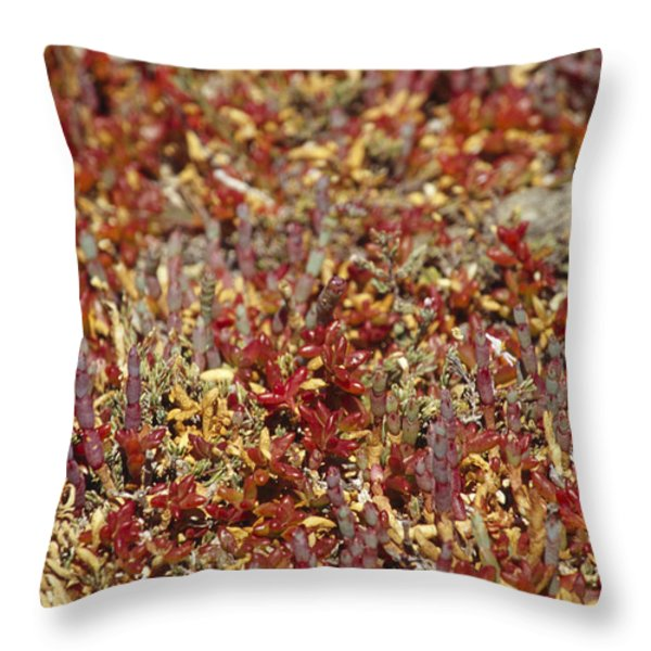A Myriad Of Bright Red And Orange Throw Pillow by Jason Edwards