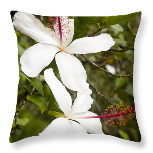 A Native Hawaiian Hibiscus Arnottianus Throw Pillow by Taylor S. Kennedy