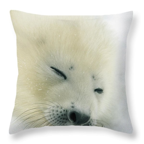 A  Newborn Harp Seal Pup In Its Thin Throw Pillow by Norbert Rosing
