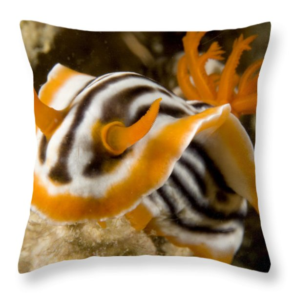 A Nudibranch Crawls Over The Reef Throw Pillow by Tim Laman