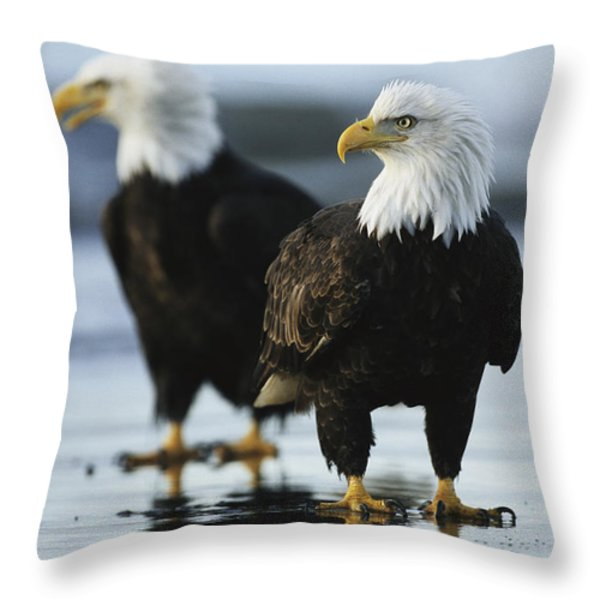 A Pair Of American Bald Eagles Stand Throw Pillow by Klaus Nigge