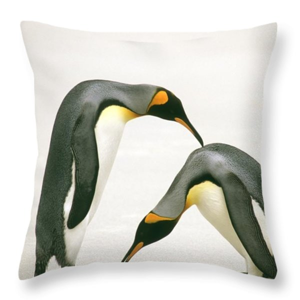 A Pair Of King Penguins In A Courtship Throw Pillow by Ralph Lee Hopkins