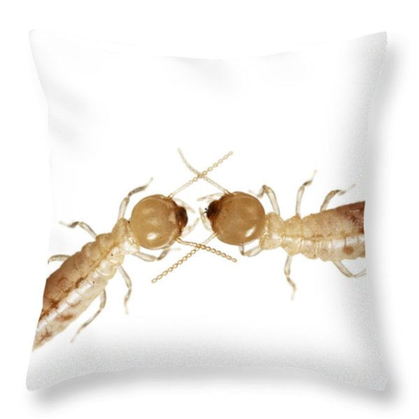 A Pair Of Termites Collected Throw Pillow by David  Liittschwager