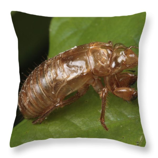 A Periodical Cicada Exoskeleton Throw Pillow by George Grall