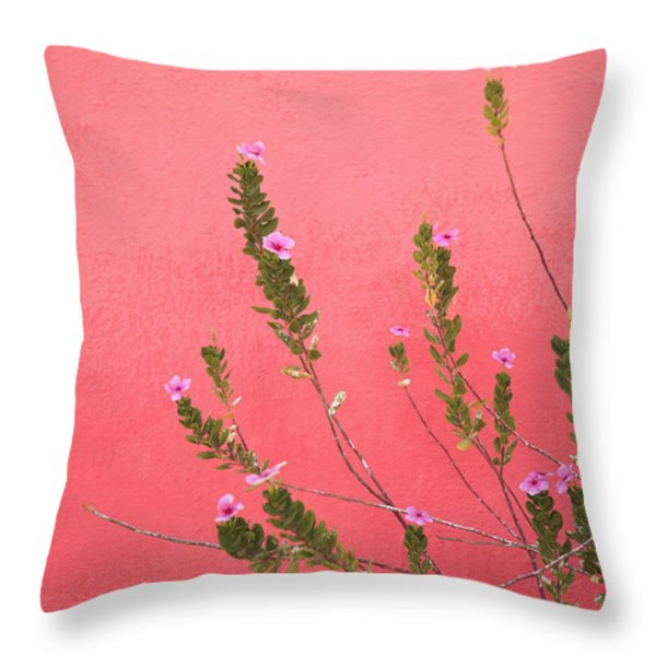 A Pink Flowering Plant Growing Beside A Throw Pillow by Stuart Westmorland