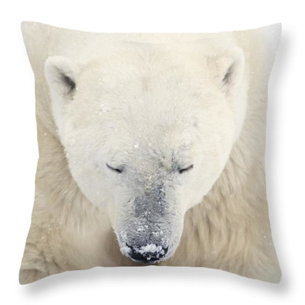 A Polar Bear Ursus Maritimus Resting Throw Pillow by Richard Wear