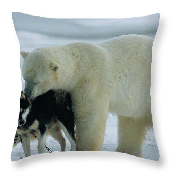 A Polar Bear Ursus Maritimus Snuggles Throw Pillow by Norbert Rosing
