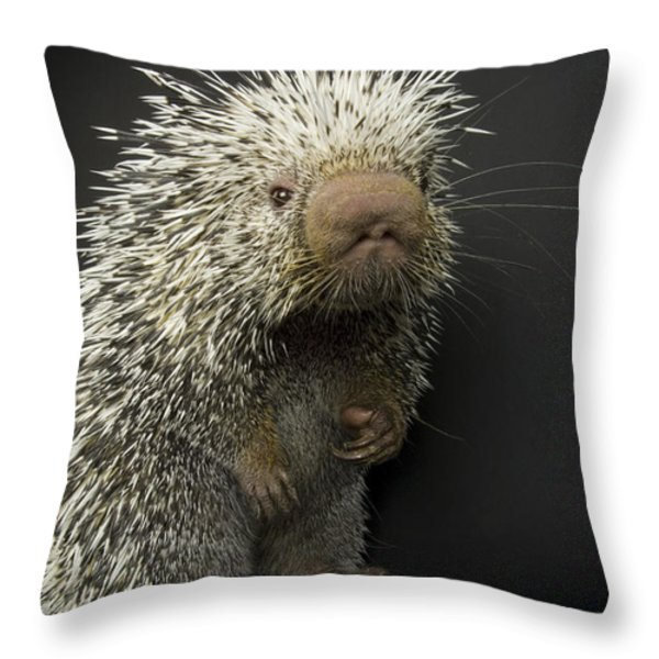 A Prehensile-tailed Porcupine Coendou Throw Pillow by Joel Sartore