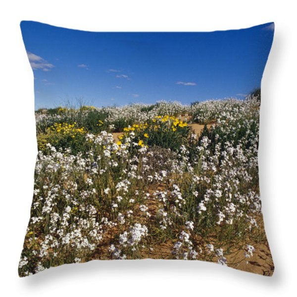 A Riot Of Wild Stock Flowers And Annual Throw Pillow by Jason Edwards