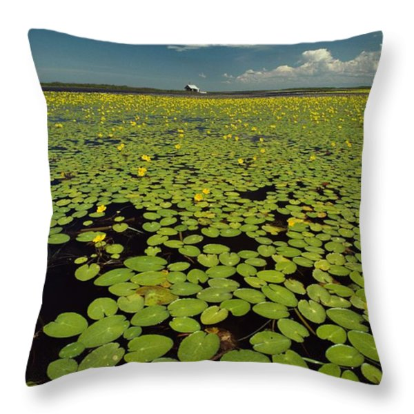 A River Delta Filled With Lily Pads Throw Pillow by Bill Curtsinger