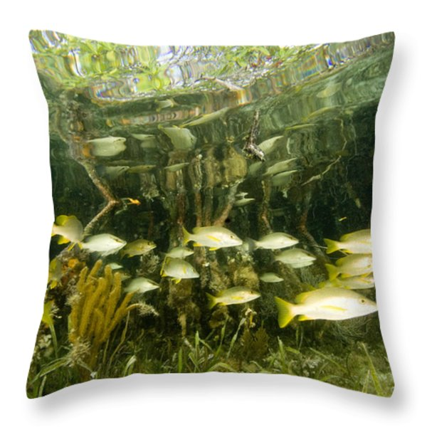 A School Of Snappers Shelters Among Throw Pillow by Tim Laman