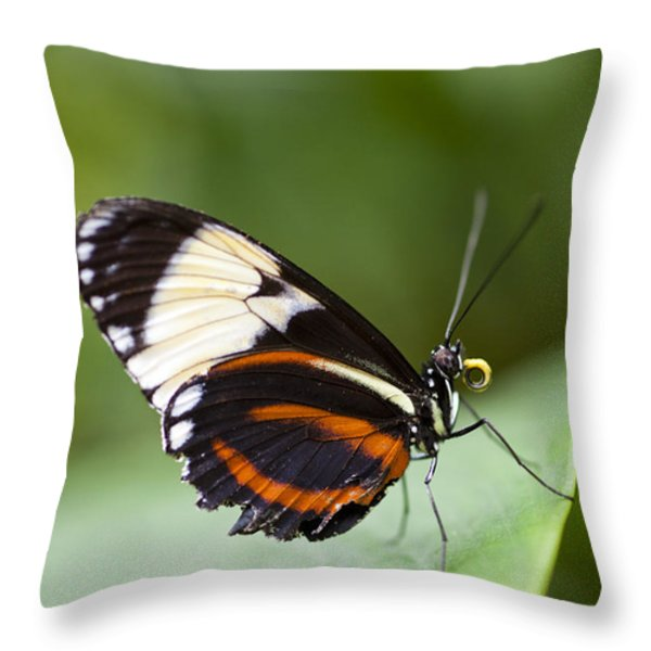 A Side View Of A Butterfly Throw Pillow by Taylor S. Kennedy