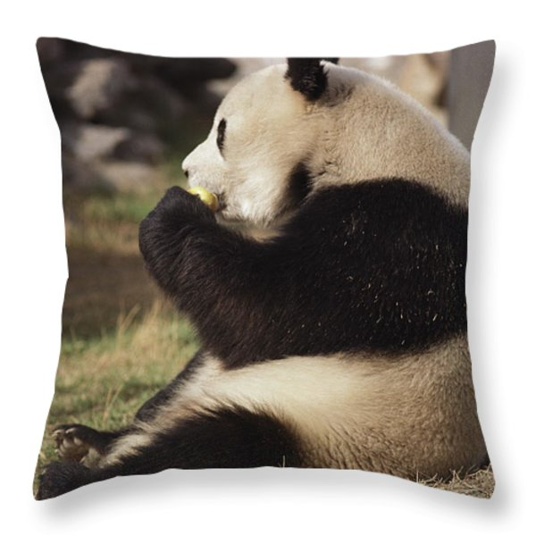 A Side View Of A Panda Bear Sitting Throw Pillow by Todd Gipstein