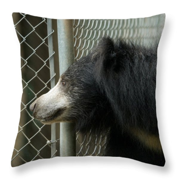 A Sloth Bear Melursus Ursinusat Throw Pillow by Joel Sartore
