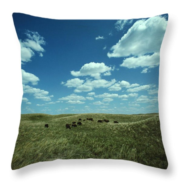 A Small Herd Of Bison Bison Bison Graze Throw Pillow by James P. Blair