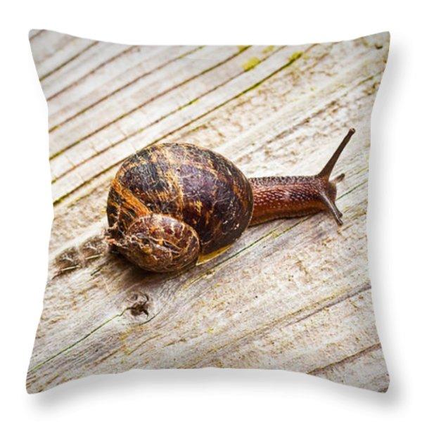 A Snail Sliding Across A Wooden Surface Throw Pillow by Tom Gowanlock