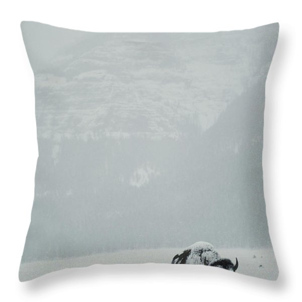 A Snow-covered American Bison Stands Throw Pillow by Michael S. Quinton