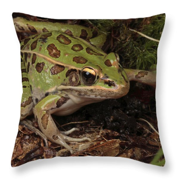 A Southern Leopard Frog Pauses In Leaf Throw Pillow by George Grall