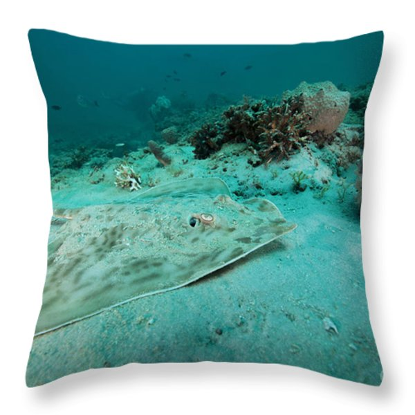 A Southern Stingray On The Sandy Bottom Throw Pillow by Michael Wood
