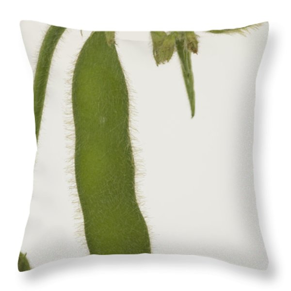 A Soybean Plant Throw Pillow by Joel Sartore