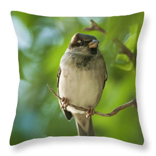 A Sparrow Perched On A Small Branch Throw Pillow by Ben Welsh