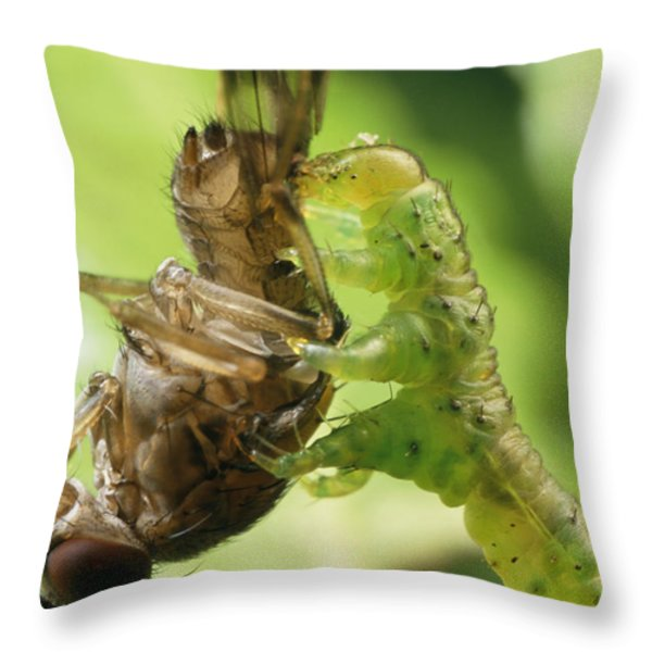 A Species Of Eupithecia, A Carnivorous Throw Pillow by Darlyne A. Murawski