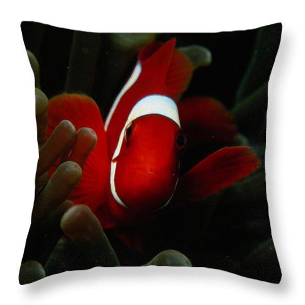 A Spinecheek Anemonefish Premnas Throw Pillow by Tim Laman