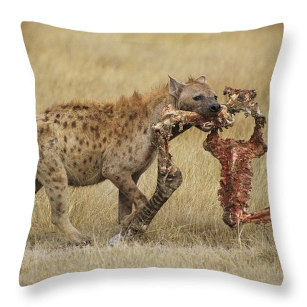 A Spotted Hyena Carries A Piece Throw Pillow by Tim Laman