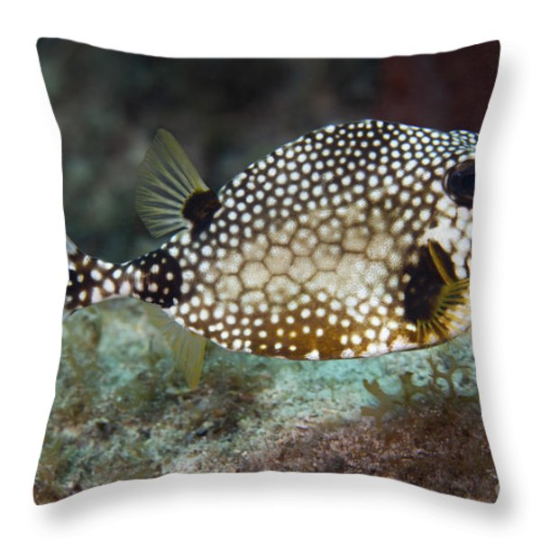A Spotted Trunkfish, Key Largo, Florida Throw Pillow by Terry Moore