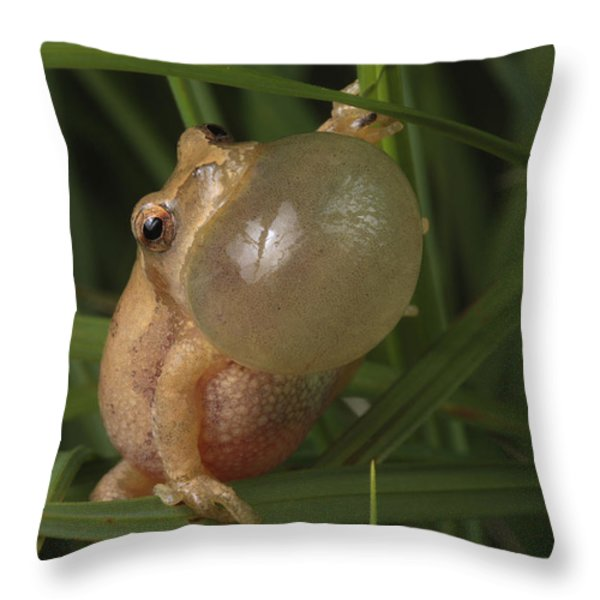 A Spring Peeper Faces The Camera Throw Pillow by George Grall
