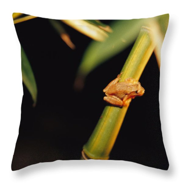 A Spring Peeper Frog Perches Throw Pillow by Raymond Gehman