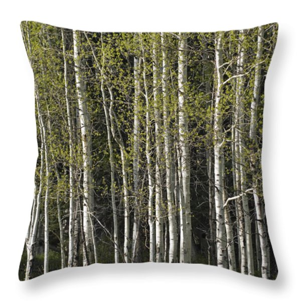 A Stand Of Aspen Trees At Wolf Creek Throw Pillow by Rich Reid