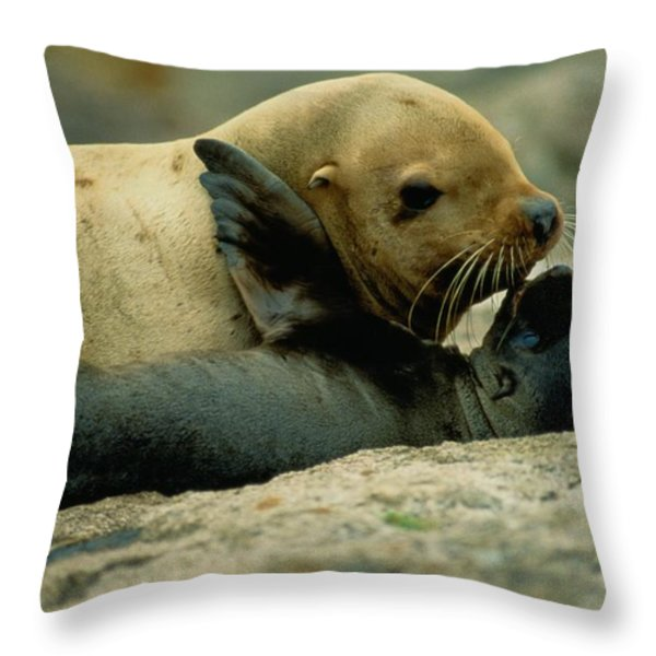 A Steller Sea Lion Cow Eumetopias Throw Pillow by Joel Sartore