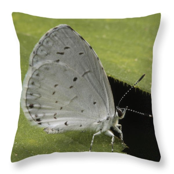 A Summer Azure Lights On A Leaf Throw Pillow by George Grall